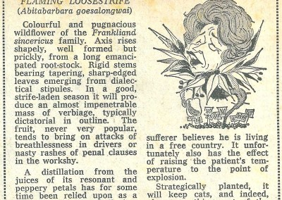 Roy Raymonde Cartoonist - Raymonde's Blooming Wonders Sunday Telegraph 1