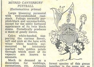 Roy Raymonde Cartoonist - Raymonde's Blooming Wonders Sunday Telegraph 2