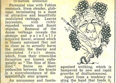 Roy Raymonde Cartoonist - Raymonde's Blooming Wonders Sunday Telegraph 4